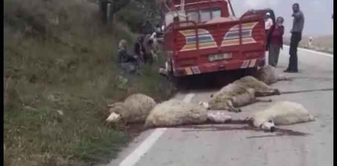 Kamyon koyun sürüsüne daldı!